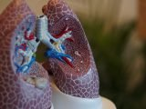model płuc